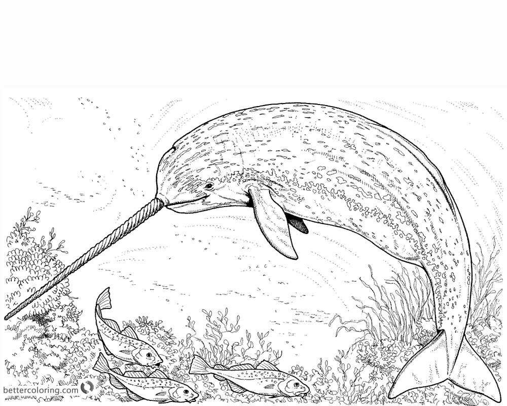 Realistic Arctic Narwhal Coloring Pages with Fishes printable
