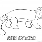 Red Panda Coloring Pages Walking