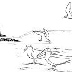Lighthouse Coloring Pages Birds on the Beach