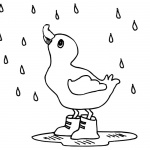 Raindrop Coloring Pages A Duck in the Rain