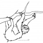 Realistic Sloth Coloring Pages