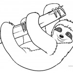 Sloth Coloring Pages Realistic Three Toed Sloth