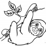 Sloth Coloring Pages Three Toed Sloth and Tree Brach Line Art