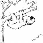 Sloth Coloring Pages Two Toed Sloth from South America