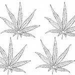 Weed Coloring Pages Four Leaves Clipart