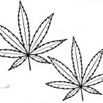 Weed Leaf Coloring Pages Marijuana Leaf