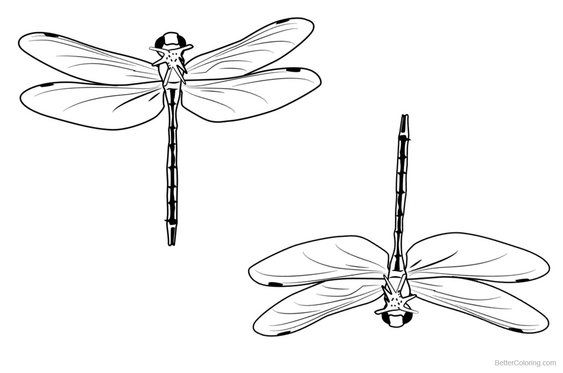 Dragonflies Coloring Pages Clipart printable for free