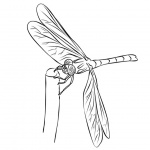Dragonflies Coloring Pages Line Drawing