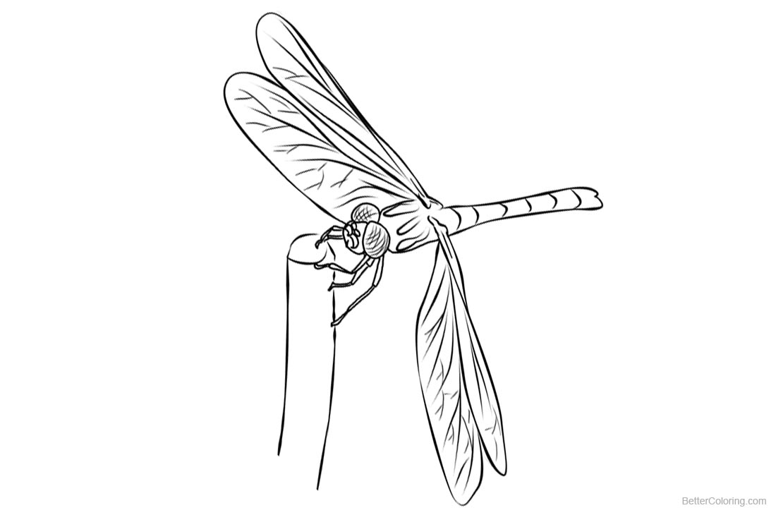 Dragonflies Coloring Pages Line Drawing printable for free