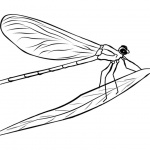 Dragonflies Coloring Pages Lineart