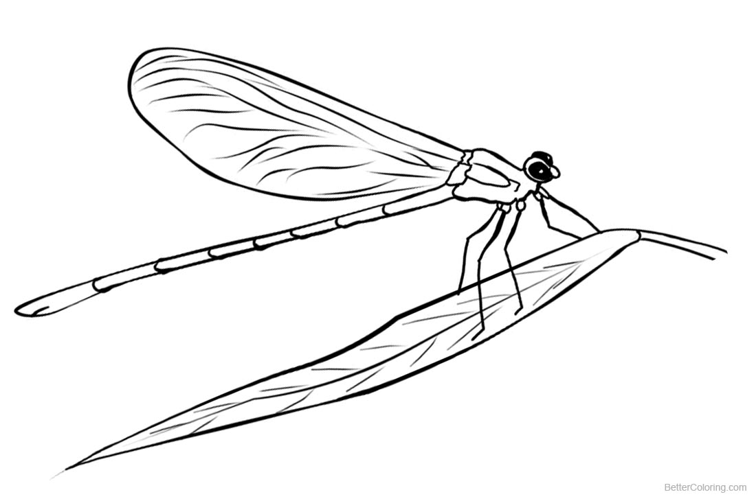 Dragonflies Coloring Pages Lineart printable for free