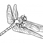 Dragonflies Coloring Pages Sketch Drawing