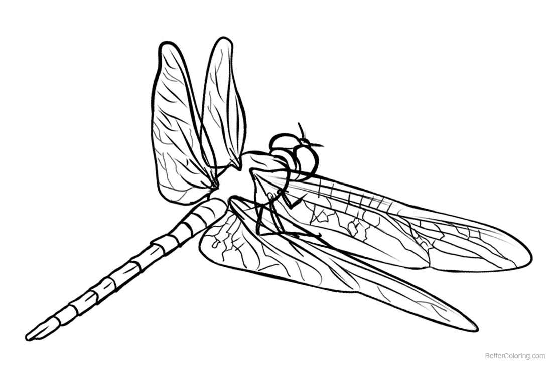 Dragonflies Coloring Pages Sketch Drawing printable for free