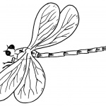 Dragonfly Coloring Pages Line Drawing