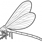 Dragonfly Coloring Pages Realistic Drawing