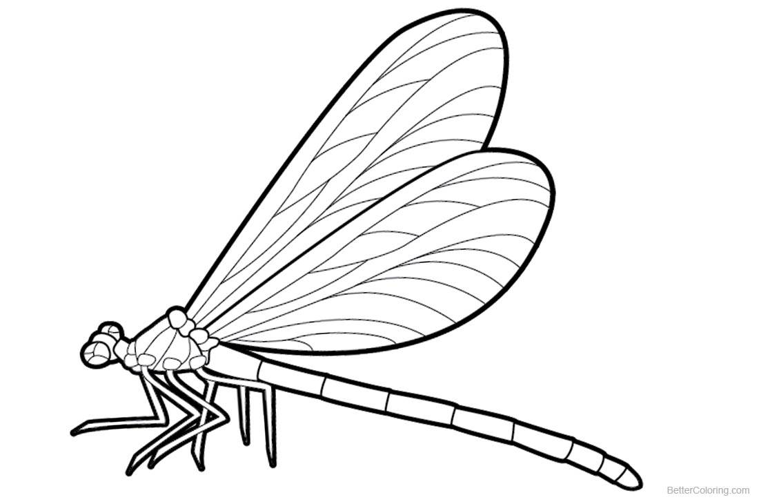 Dragonfly Coloring Pages Realistic Drawing - Free Printable Coloring ...