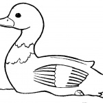 Duck Coloring Pages Lineart