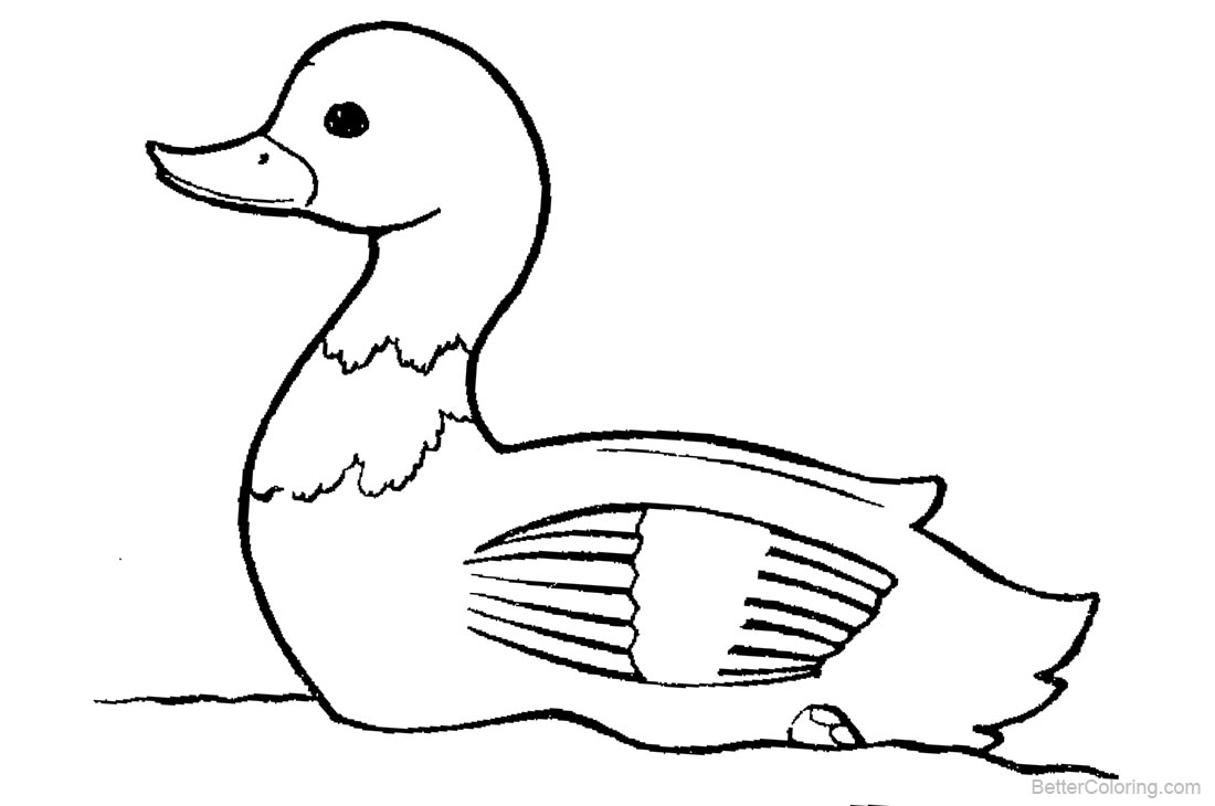 Duck Coloring Pages Lineart printable for free