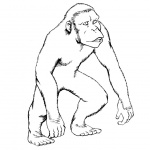 Gorilla Coloring Pages Realistic Line Drawing