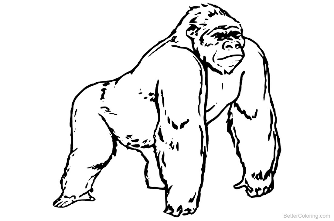 Gorilla Coloring Pages printable for free