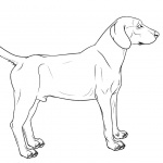 Hound Dog Coloring Pages