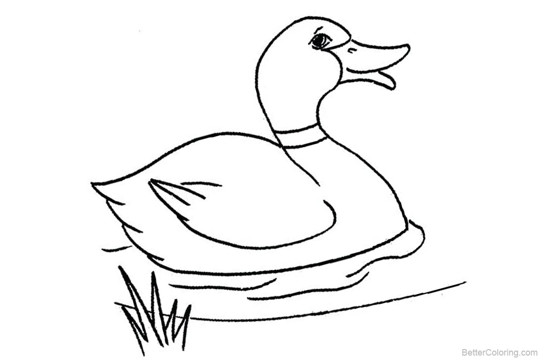 Mallard Duck Coloring Pages - Free Printable Coloring Pages