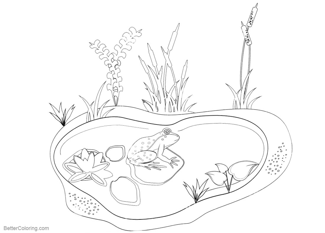 Pond Coloring Pages Animals and