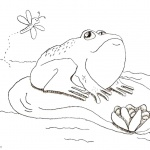 Pond Coloring Pages Cute Frog