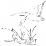 Pond Coloring Pages Duck Flying Over the Pond