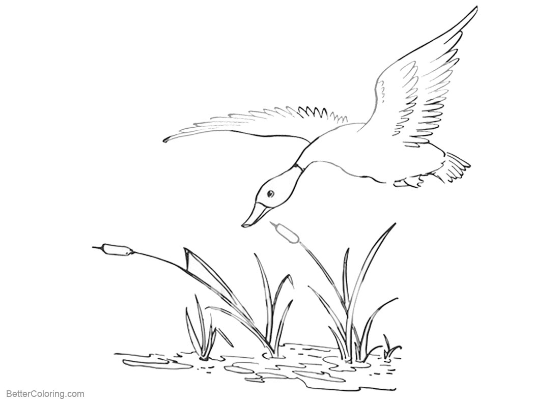 Pond Coloring Pages Duck Flying Over the Pond printable for free