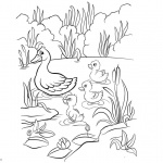 Pond Coloring Pages Ducklings