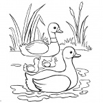 Pond Coloring Pages Ducks and Cattails
