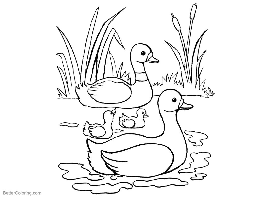pond coloring pages | Pond Coloring Pages Ducks and Cattails - Free Printable ...
