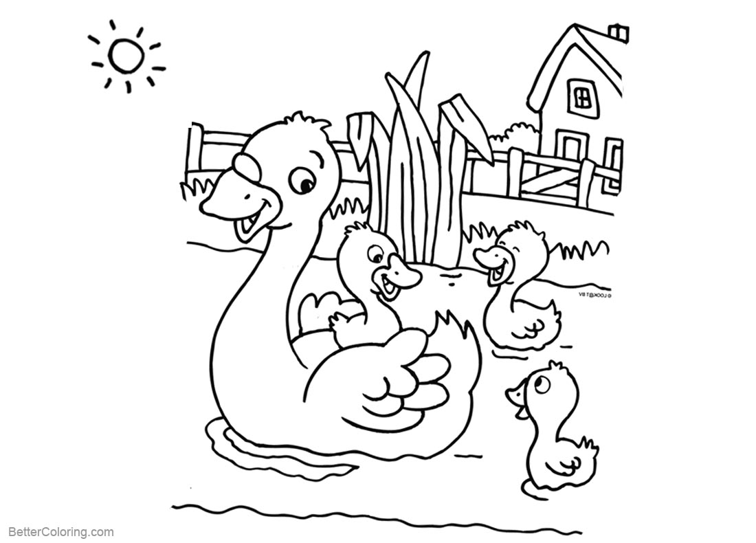 Pond Coloring Pages Four Ducks Swimming printable for free