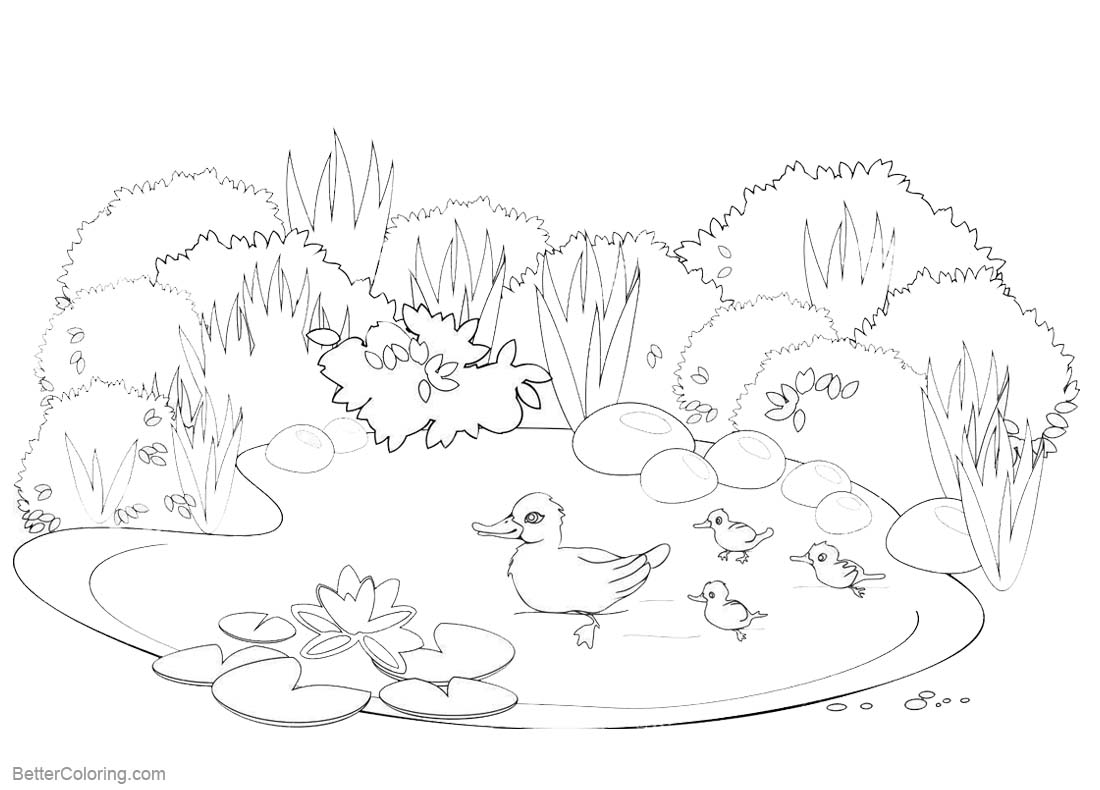 Pond Coloring Pages Happy Ducks Swimming printable for free