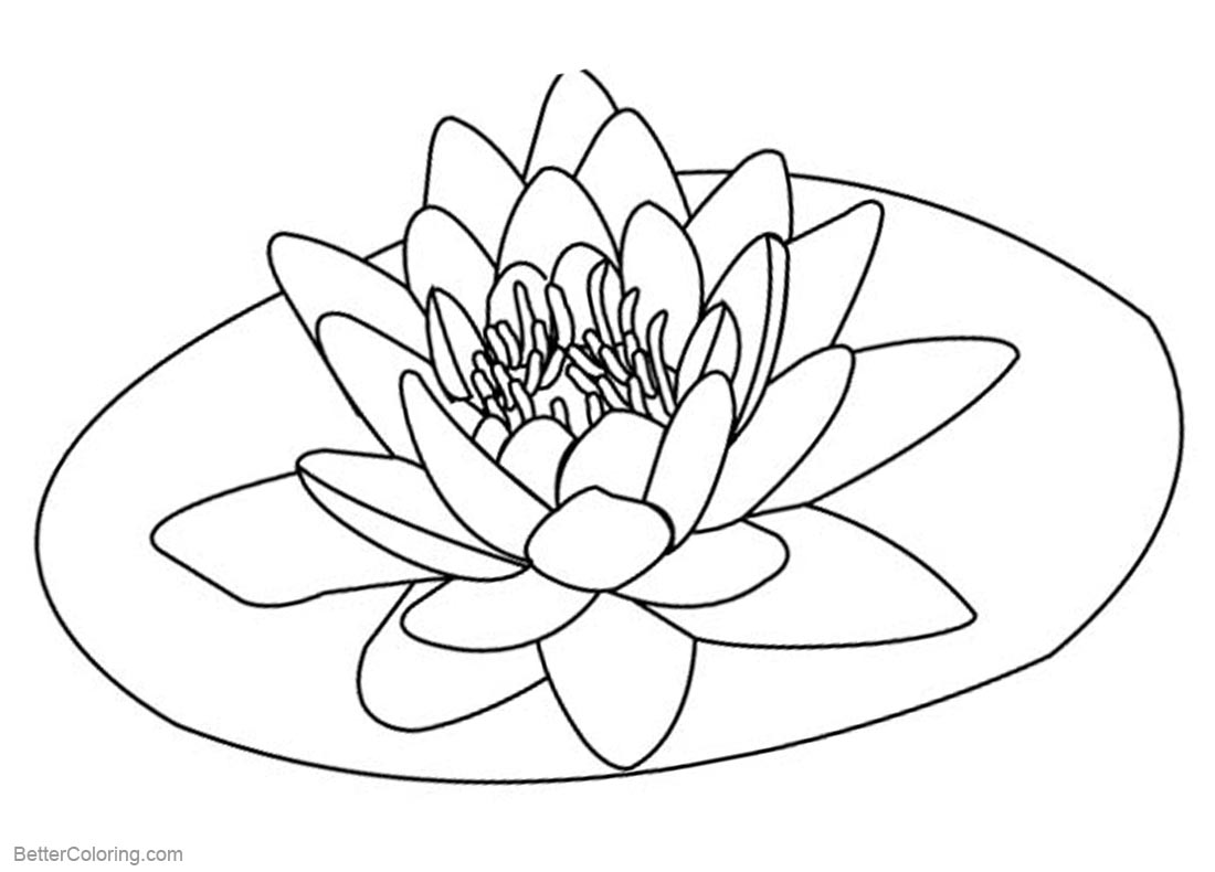 Pond Coloring Pages Lily Pad Flower Free Printable