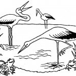 Pond Coloring Pages Storks and Frogs