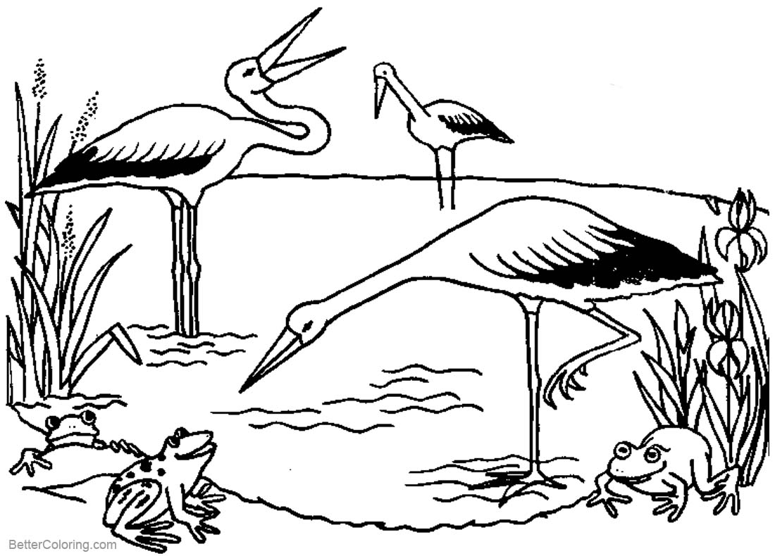 Pond Coloring Pages Storks and Frogs printable for free