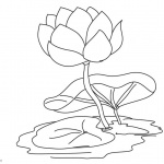 Pond Coloring Pages Water Lily Flower