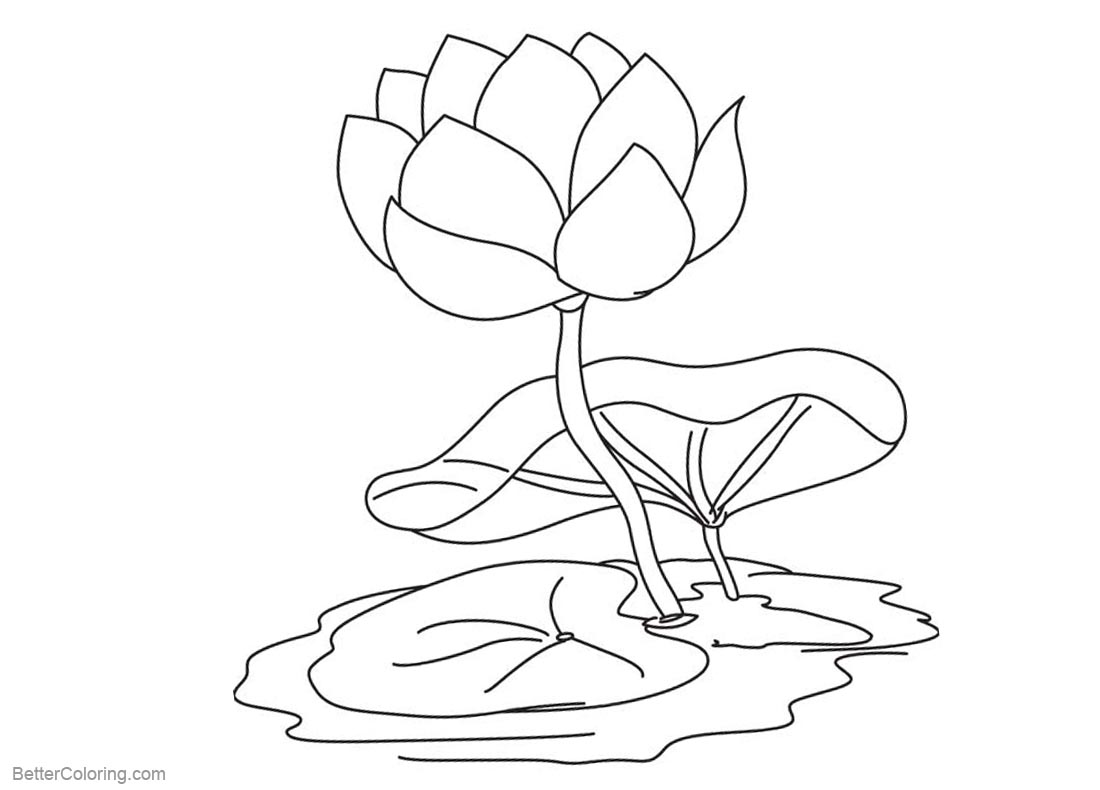 Pond Coloring Pages Water Lily Flower printable for free
