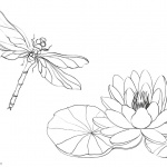 Pond Coloring Pages Water Lily and Dragonfly