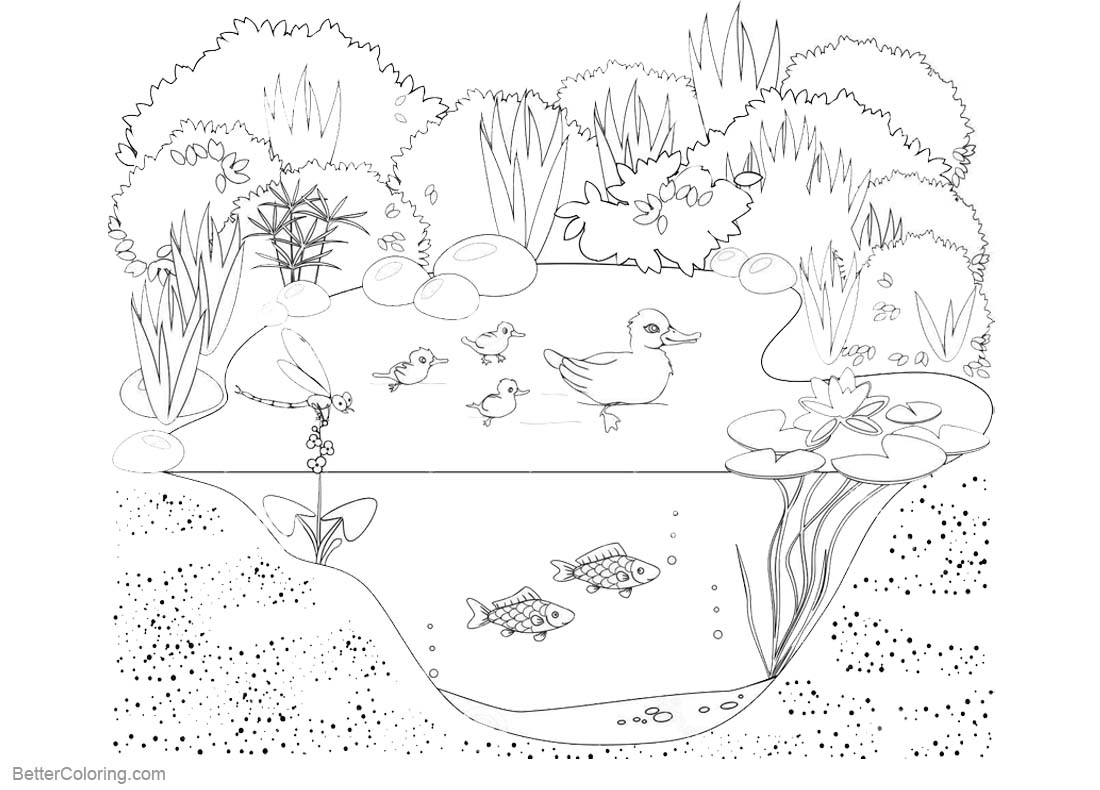 Pond Life Coloring Pages Animals and Plants printable for free