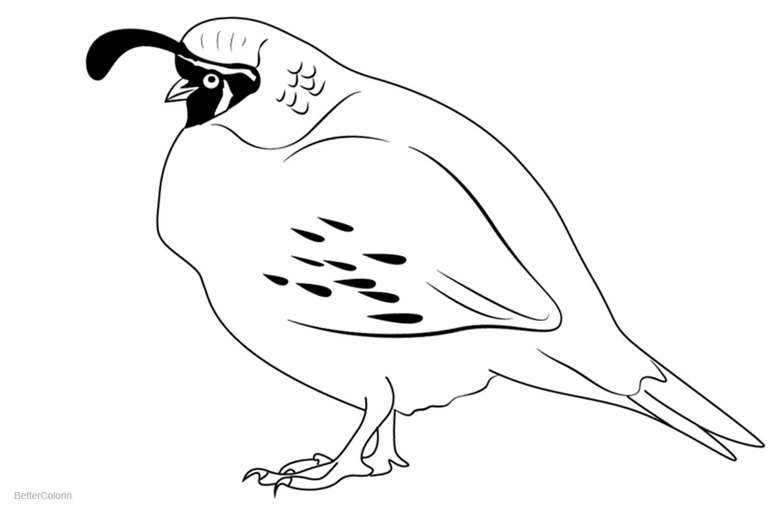 Quail Coloring Pages Bird Lineart Free Printable Coloring Pages