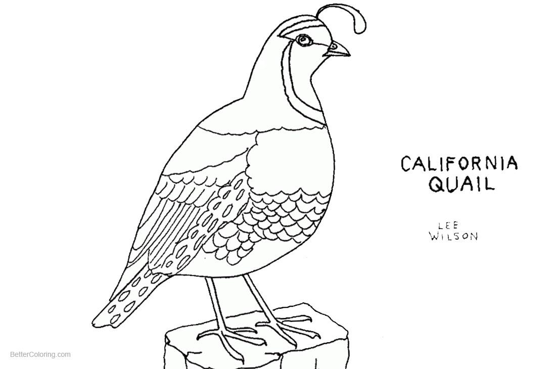 Quail Coloring Pages California Quail Line Art - Free ...