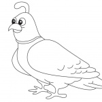 Quail Coloring Pages Line Drawing