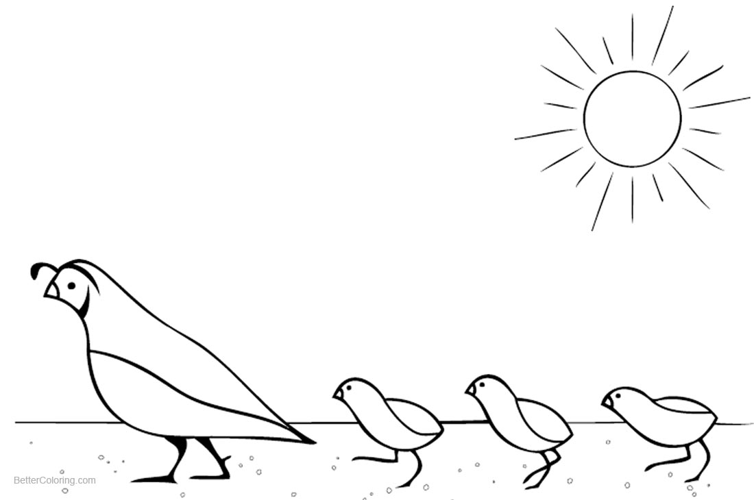 Quail Coloring Pages Mom with Three Baby Quails printable for free