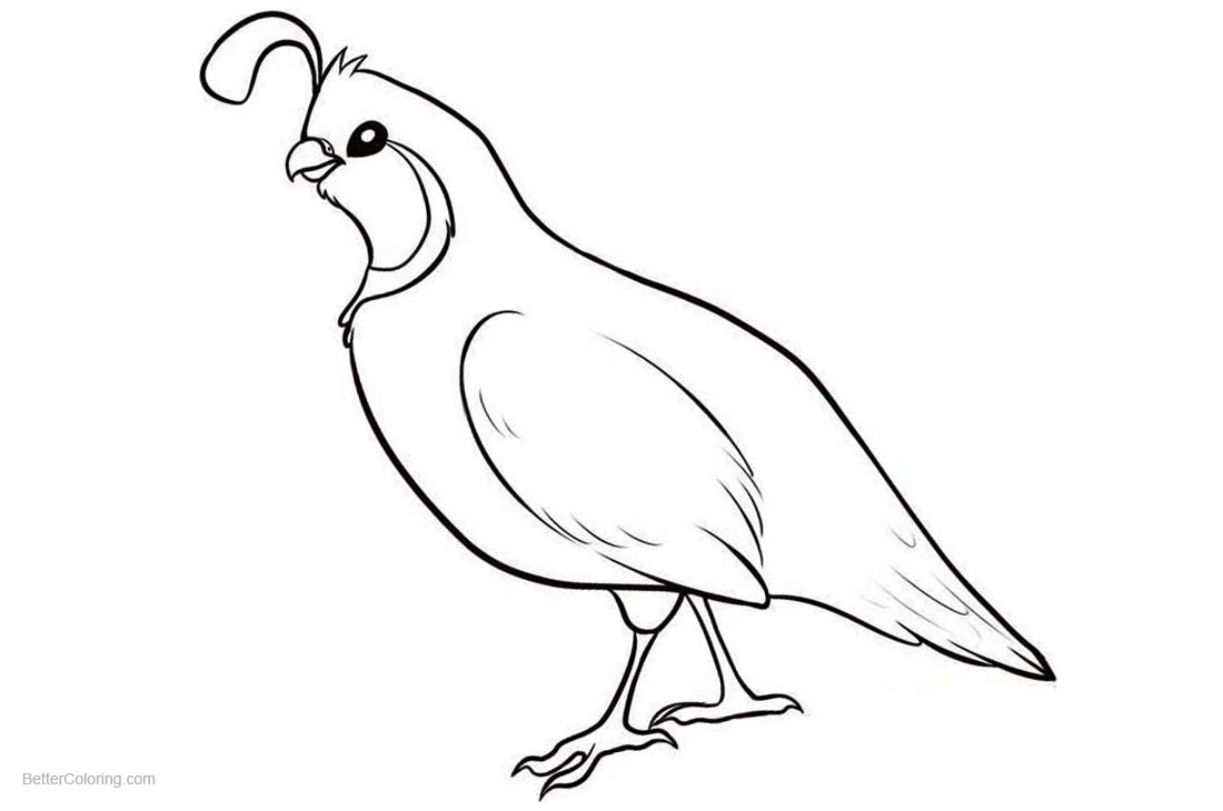 Quail Coloring Pages Simple Drawing printable for free