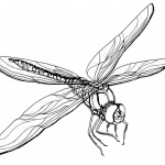 Realistic Dragonfly Coloring Pages