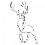 Rocky Mountain Animals Coloring Pages