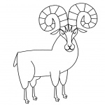 Rocky Mountain Animals Coloring Pages Goats
